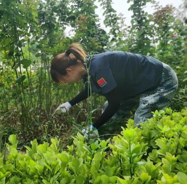 在劳动中把小家融入大家 ——用汗水滋养校园土地